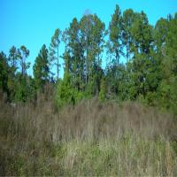 Florida Land Partners: background.jpg